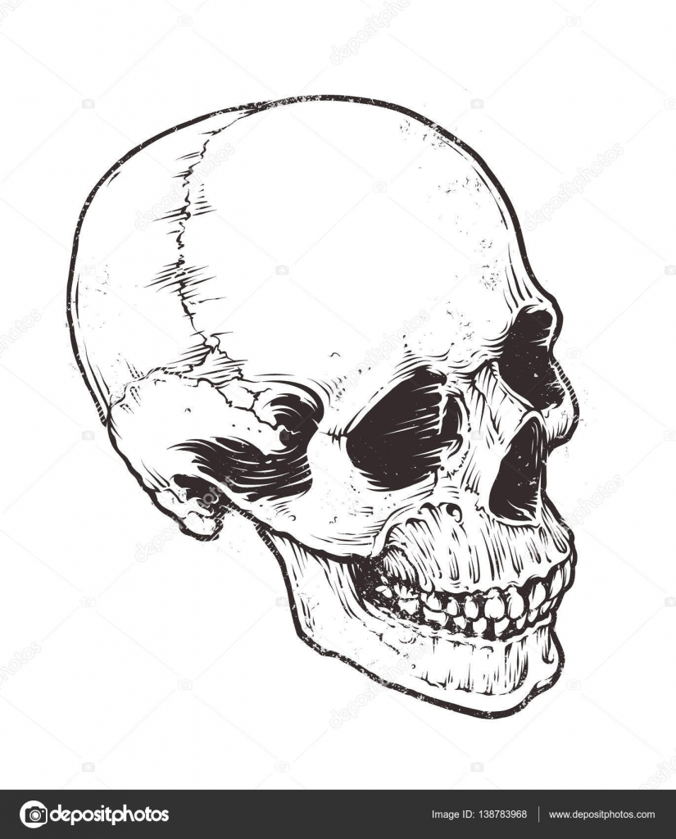 Anatomische Schädel Vektor — Stockvektor © Vecster #138783968
