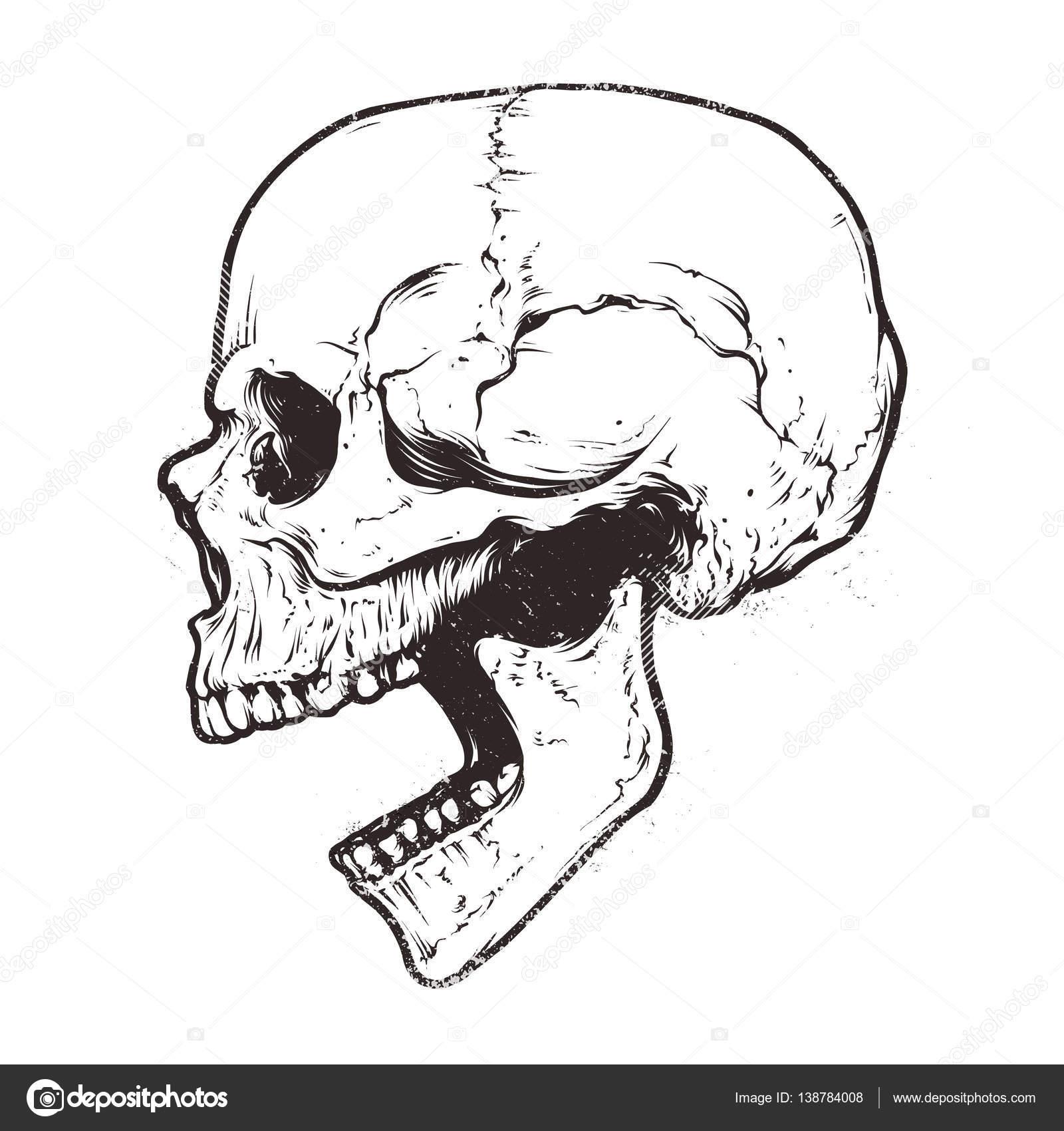 Anatomic Skull Vector — Stock Vector © Vecster #138784008