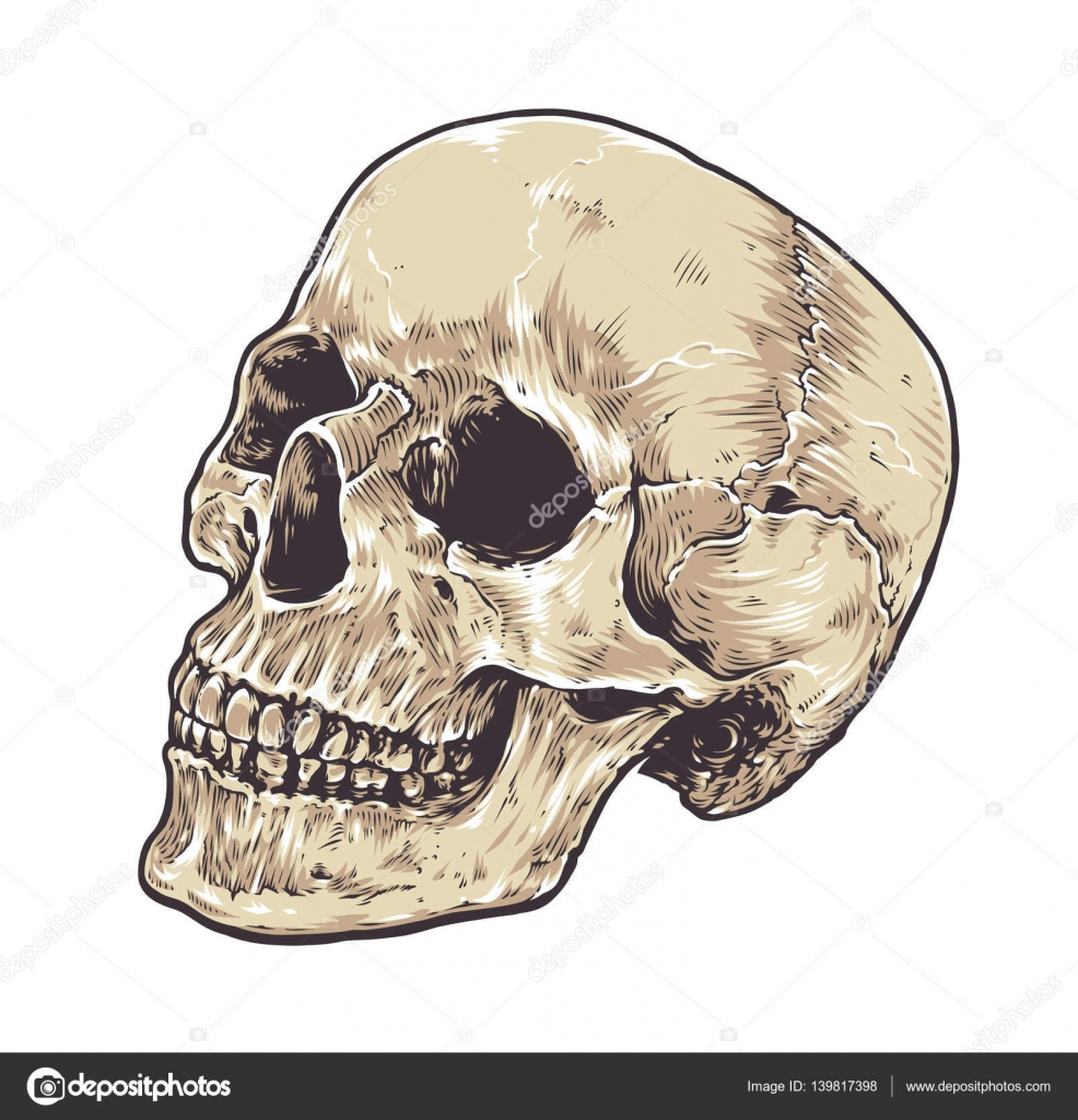 Anatomische Grunge Skull — Stockvektor © Vecster #139817398