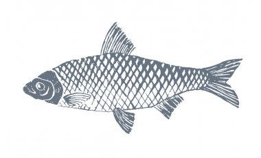 Sketch style fish