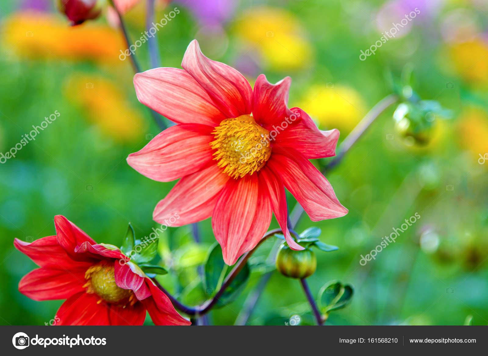 Фото цветка с красным центром 91