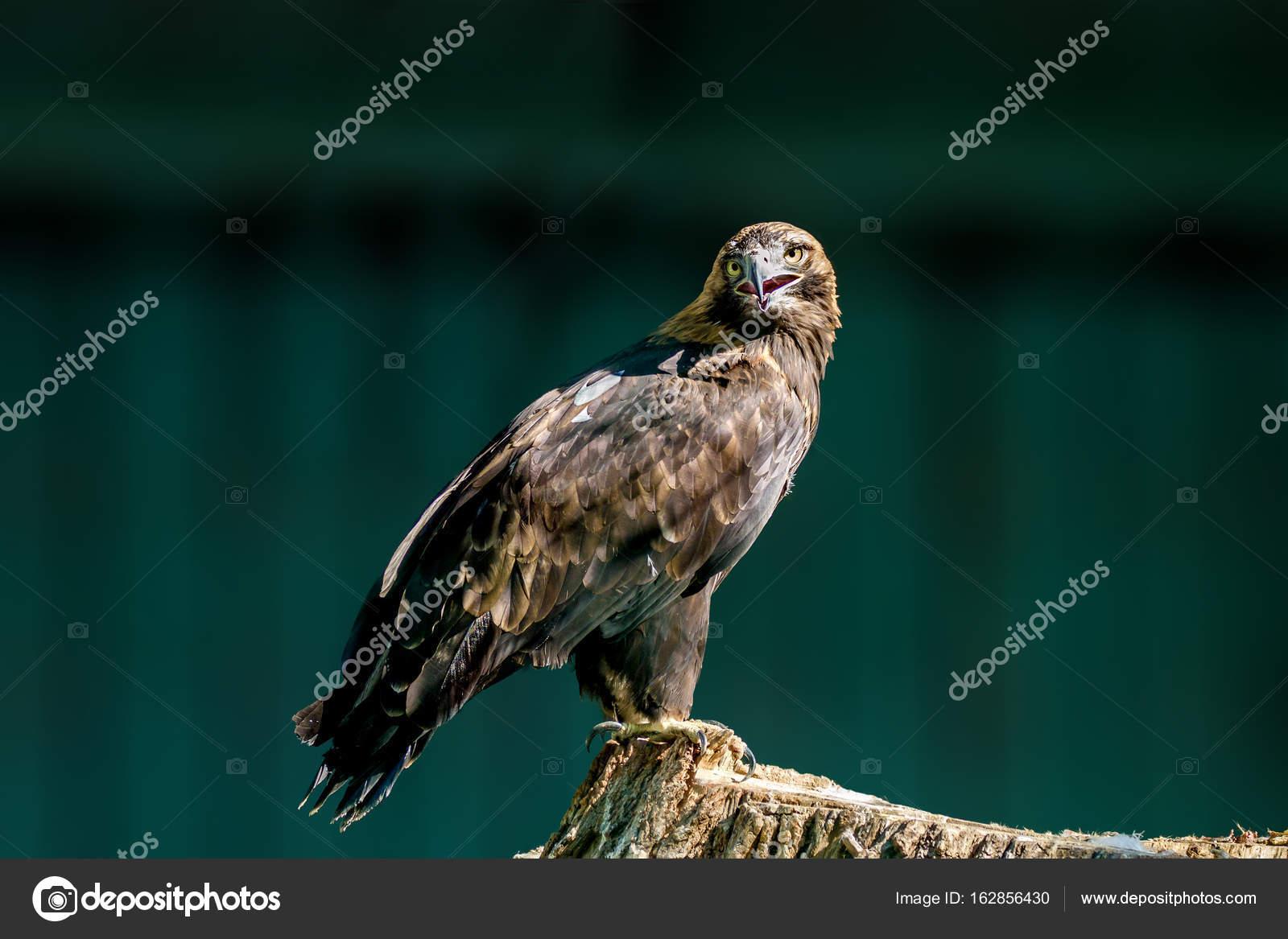 Μεγάλο πουλί και λεία