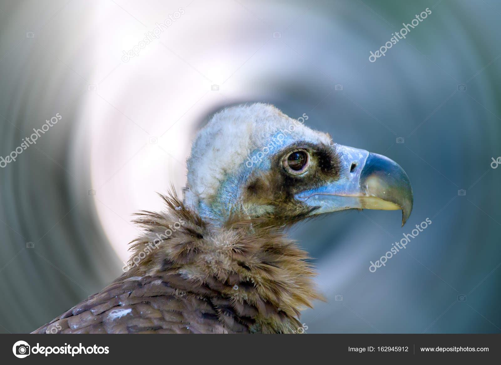 Μεγάλο μαύρο πουλί του προσώπου