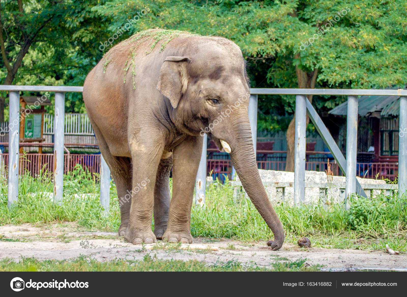 Large elephant walks in the enclosure of the zoo — Stock