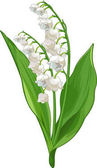 Fotografie Lily of the valley illustraion
