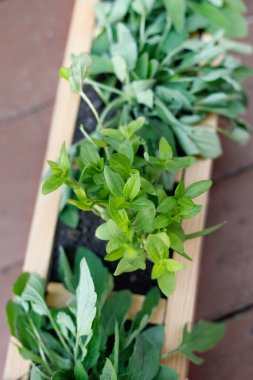 Seedlings of young flowers in wooden box outdoors.
