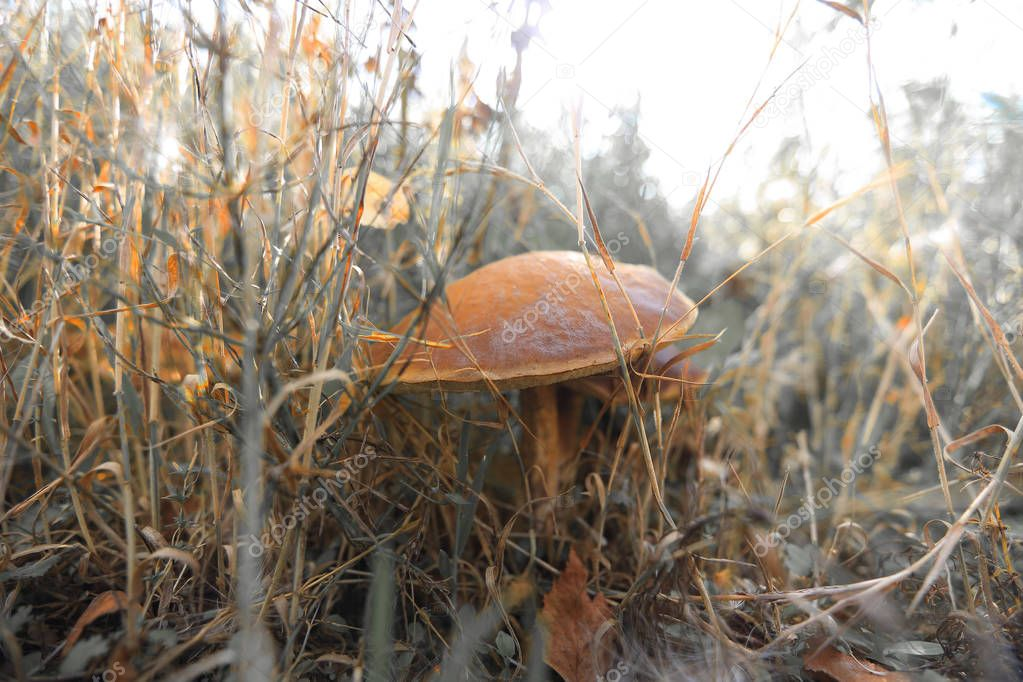 mushrooms in the grass in a forest glade