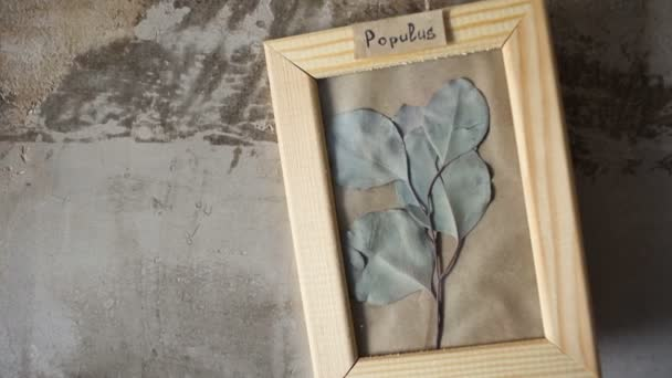 Poplar leaves in picture frame on wall