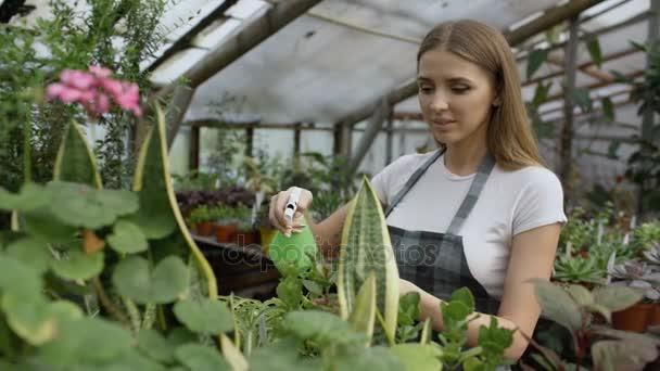 Zahradník atraktivní žena v zástěře zalévání rostlin a květin s Zahradní postřikovače ve skleníku