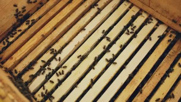 Closeup včel v dřevěných rámech medu v úlu ve včelařství