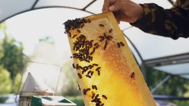 Mladý včelař muž drží dřevěný rám s včely pro kontrolu při práci ve včelařství