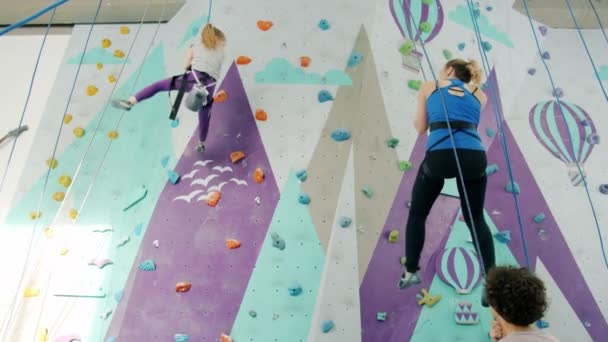 Woman and happy child descending from climbing wall with help of belayers