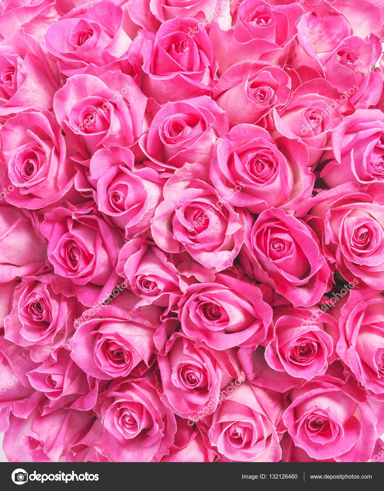 imagen de fondo de rosas rosadas fotos de stock gilmanshin