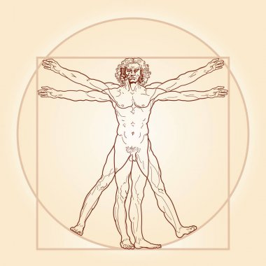 The Vitruvian man (Homo vitruviano)