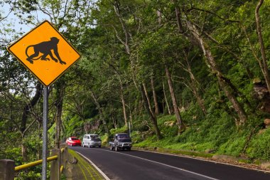 Monkey traffic sign - Indonesia Bali