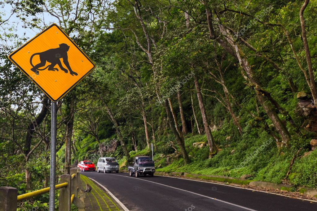 Monkey traffic sign - Indonesia Bali