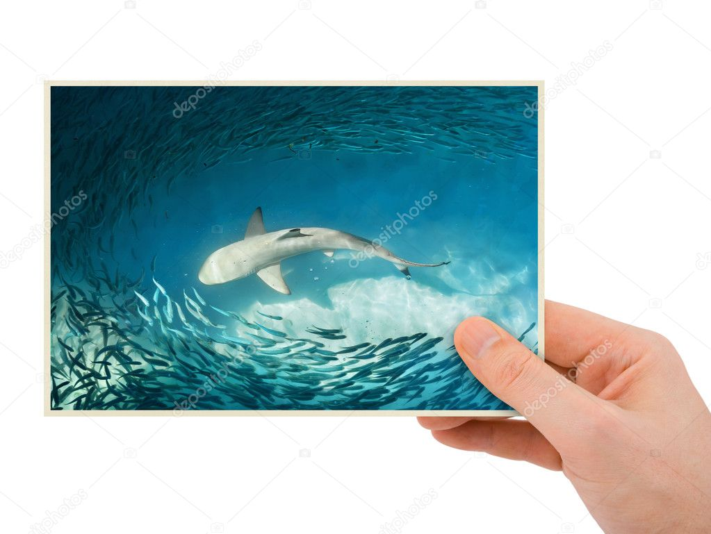 Hand and shark image (my photo)