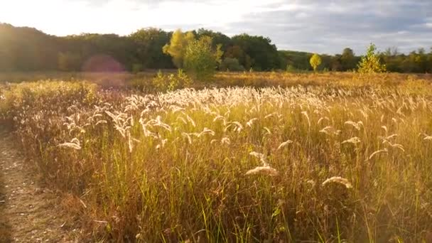 Tall Grass Field Sunset For Tall Grass Swayed In The Rays Of Sunset Quiet Video With Wiring From