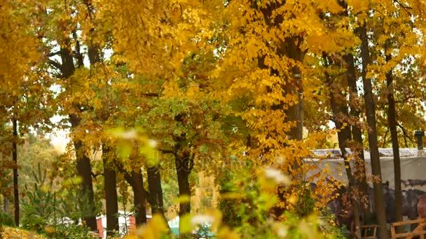 Podzimní listí na podzim. V parku všechny listy žloutnou a spadají pod poryvy větru
