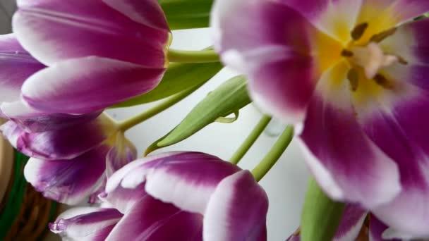 ein Strauß in verschiedenen Farben, eine Geburtstagsfeier oder ein Muttertag.