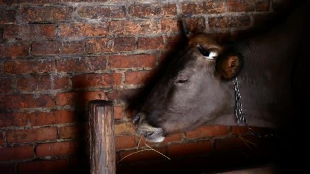 Vesnici kráva ve stodole, detail