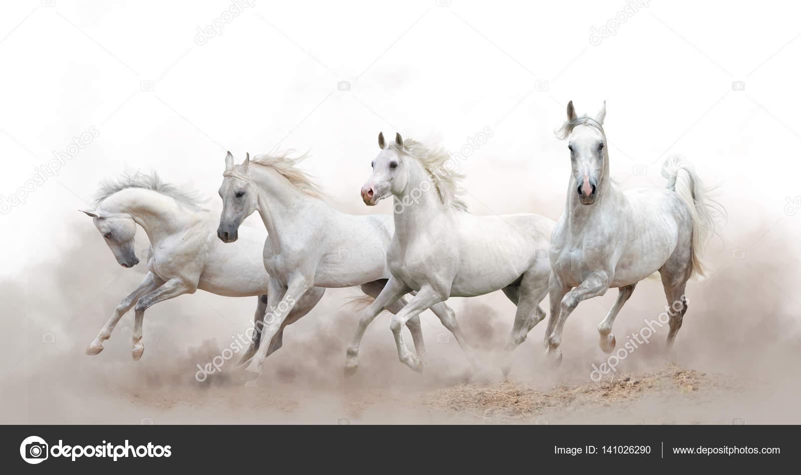 Beautiful White Arabian Horses Stock Photo C Mari Art 141026290