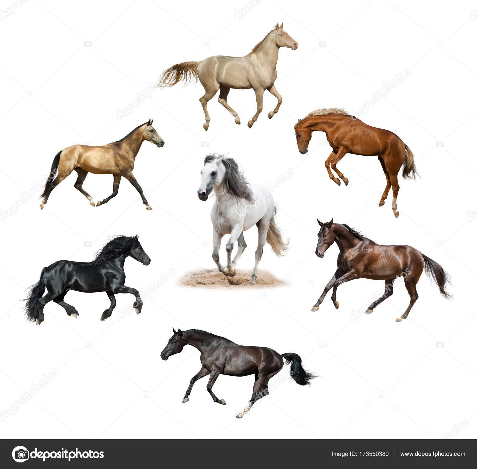 Verzameling Van Foto S: Verzameling Van Geïsoleerde Paarden