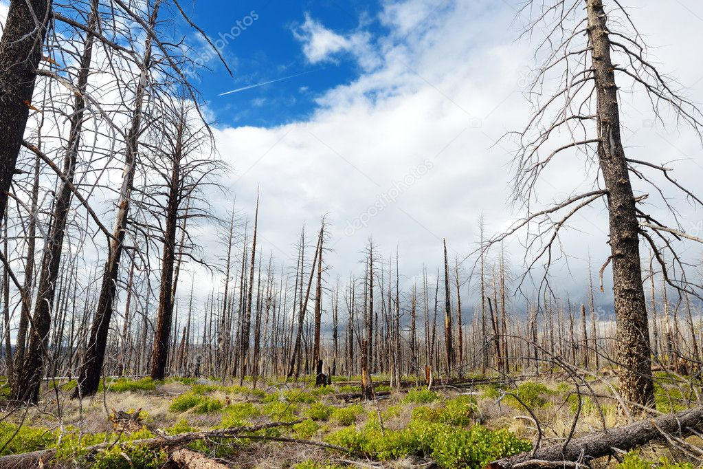 Spooky dead tree forest