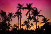 Palm stromy siluety
