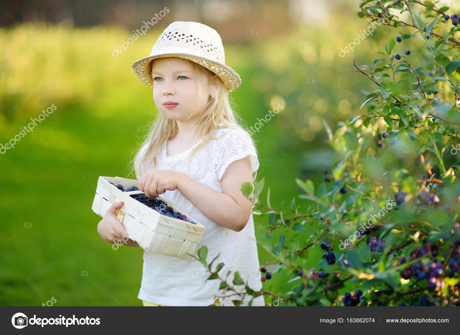 cute little girl picking fresh berries organic blueberry farm warm