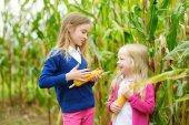 Fotografie Bezaubernde Schwestern spielen im Maisfeld