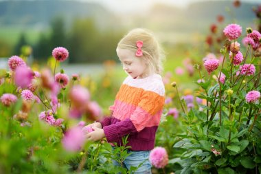 Cute little girl picking fresh flowers in dahlia meadow on sunny summer day