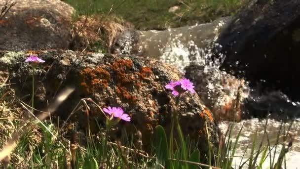Malé fialové květy jarní řeky