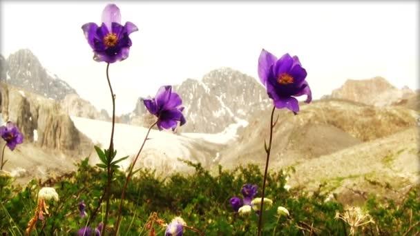 krásné malé fialové květy