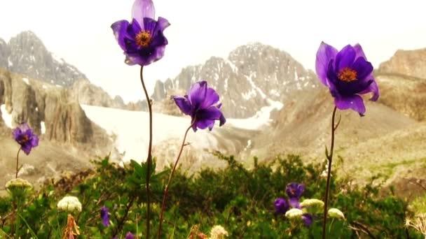 krásné, kvetoucí fialová kytice