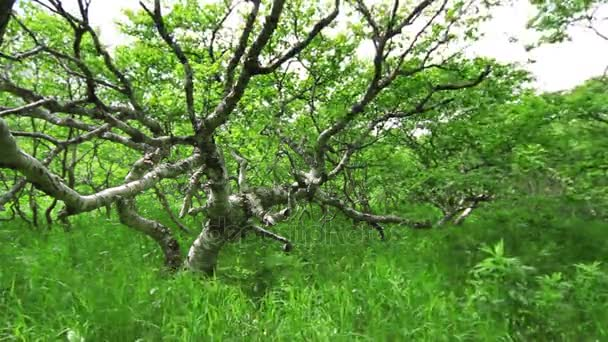 bald tree among green bushes