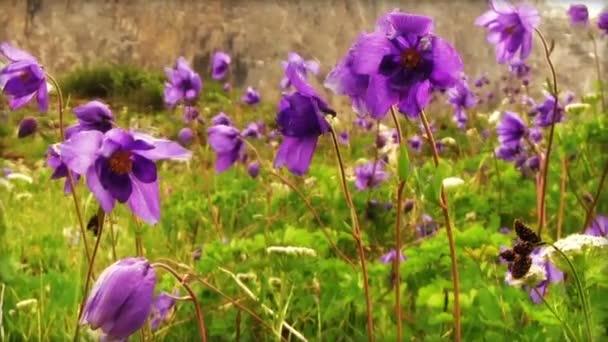 Kvetoucí fialové květy na zelené trávě