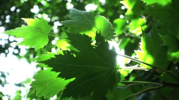 Sunlight shines through green leaves