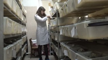 NOVOSIBIRSK RUSSIA, - APRIL 16 2017: The researcher gets white rat from a cage in a laboratory Biological Center.