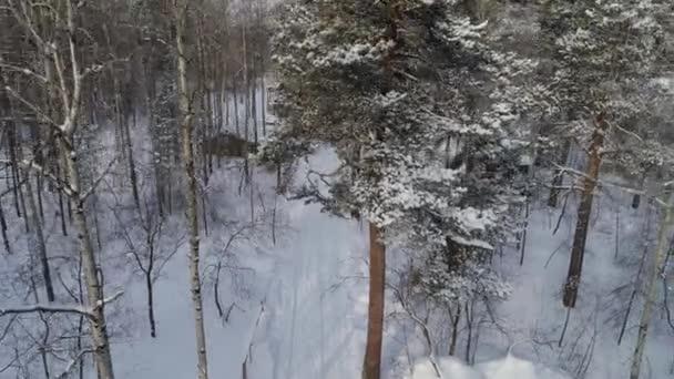 Zimní lesní stromy pokryté sněhem