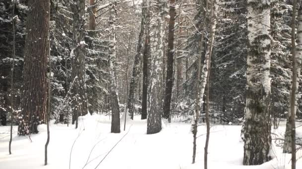 Winter-Waldbäume mit Schnee bedeckt