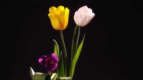 Tulip květiny ve váze pro oslavu narozenin