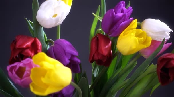 Tulip flowers in vase  for birthday celebration.