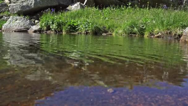 Horská krajina. Květiny modré aquilegia odráží ve vodní hladině. Sibiřské přírody
