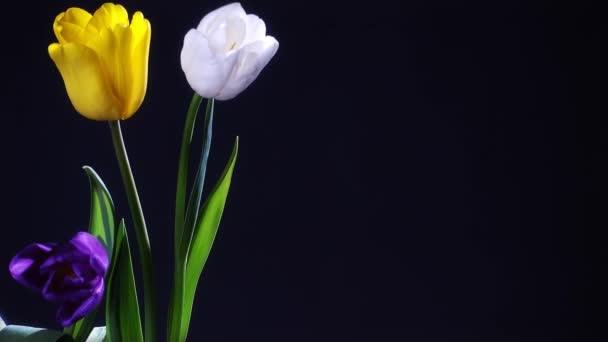 Tulip květiny ve váze. Koncept oslav