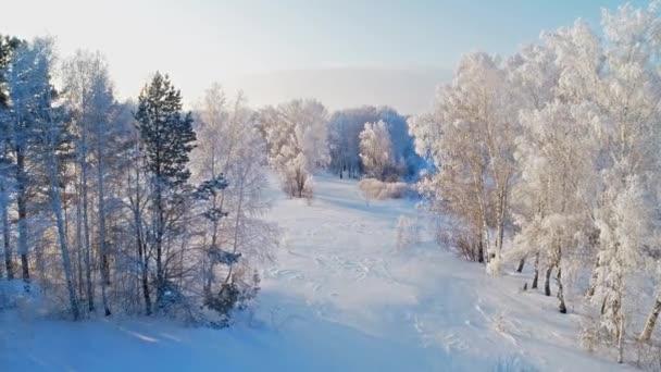 letecký pohled na krásný zasněžený zimní les