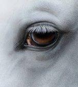 Fotografie Boční pohled closeup oko světle šedý kůň