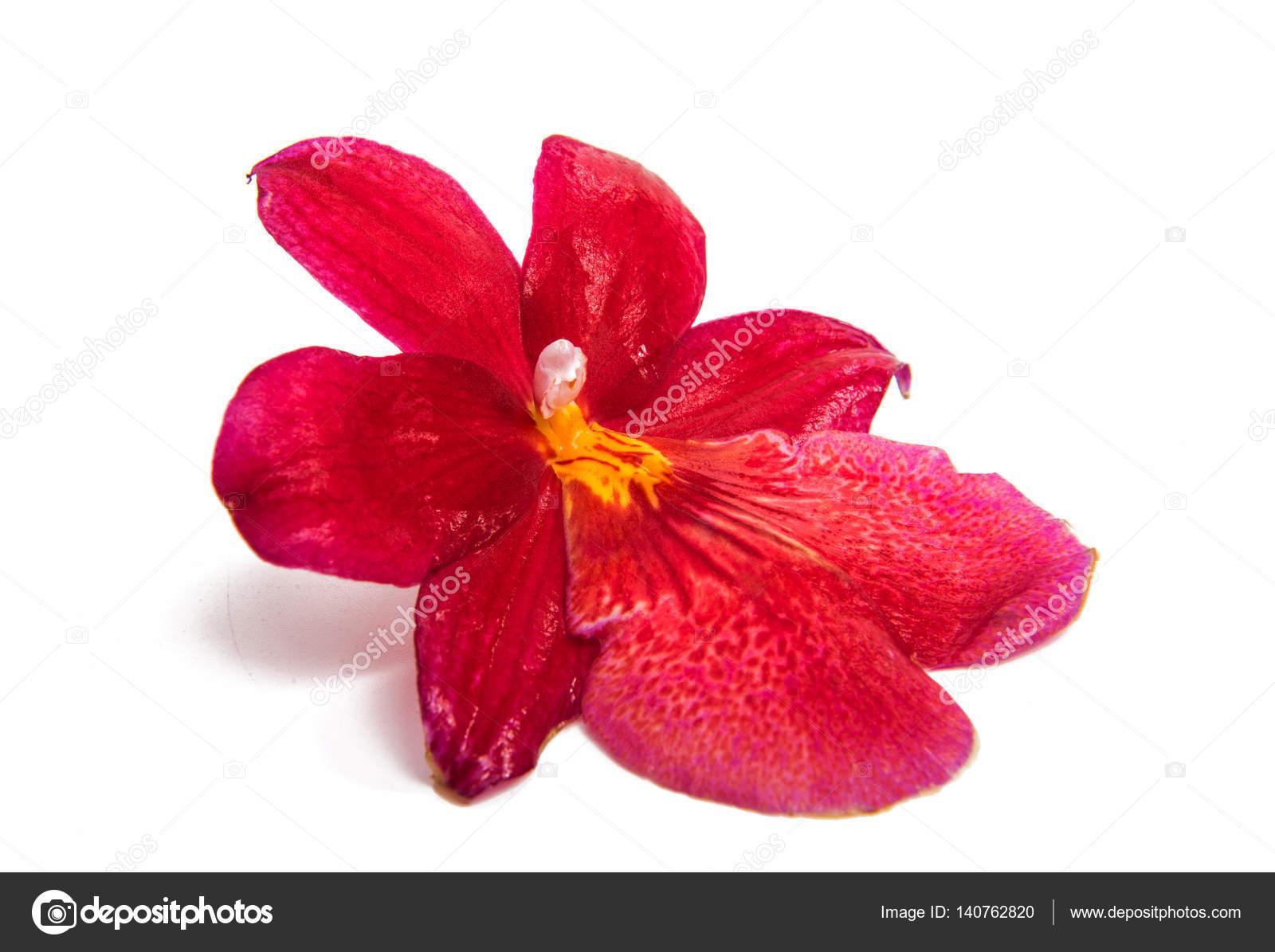 Цветы которые выгоняют мужчин из дома фото