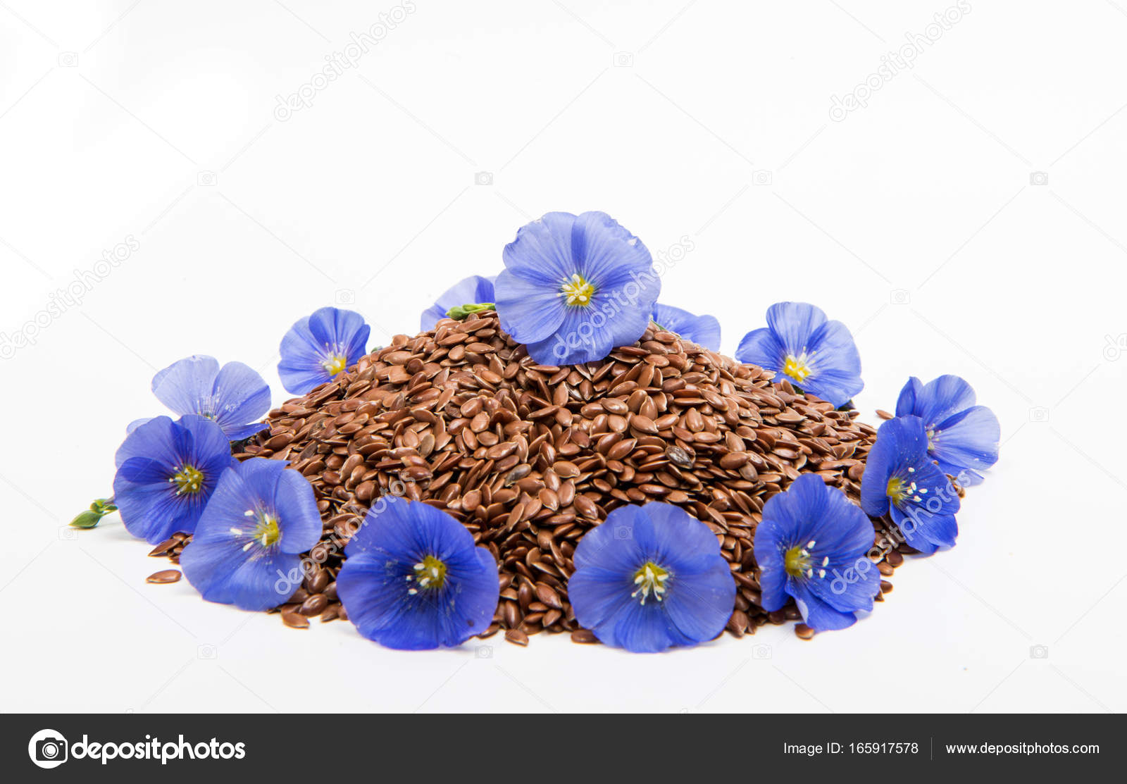 flax seeds with flax flower isolated — Stock Photo © ksena32 #165917578