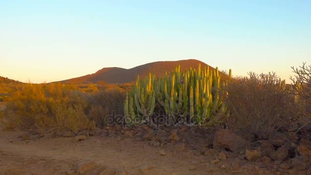 Panorámás kilátás nyílik a sivatagban kaktuszok napnyugtakor Tenerife, Kanári-szigetek